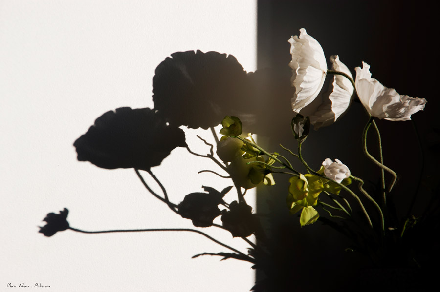 fleur ombre lumiere photo nature morte