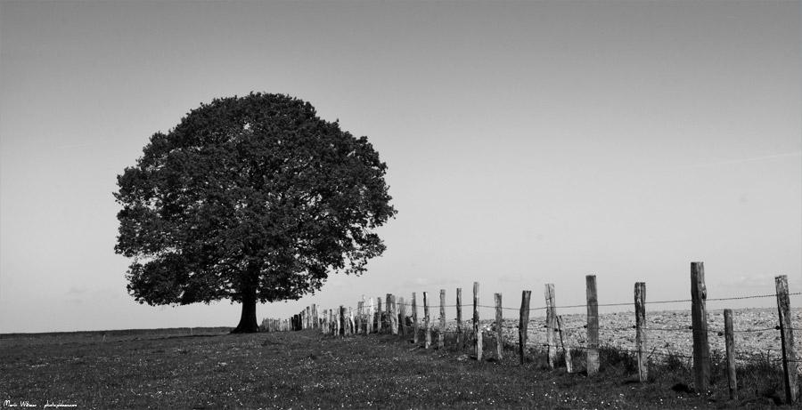 photo arbre noir et blanc campagne champs