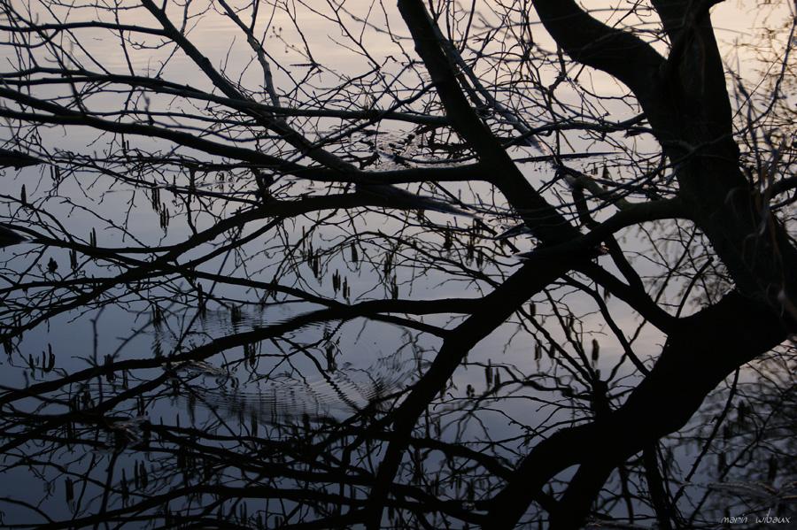Reflets de branches sur un étang