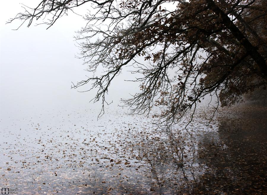Feuilles d'automne sur lac gelé avec reflet