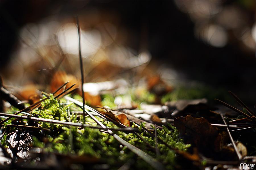 Mousse d'automne
