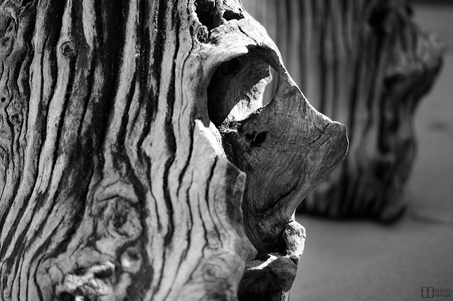 Visage de bois d'un brise-lame de St-Malo