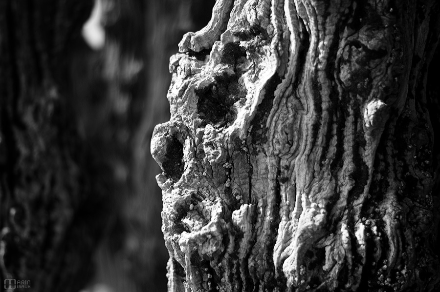 Visage de bois dans un brise-lame de St-Malo