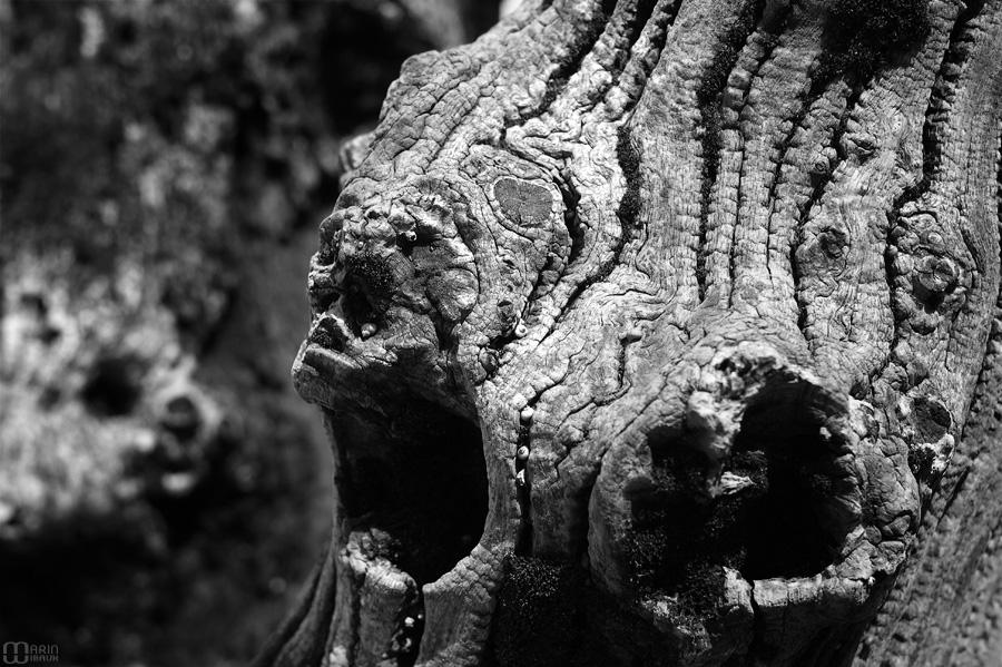 Visages dans les brise-lames de St-Malo