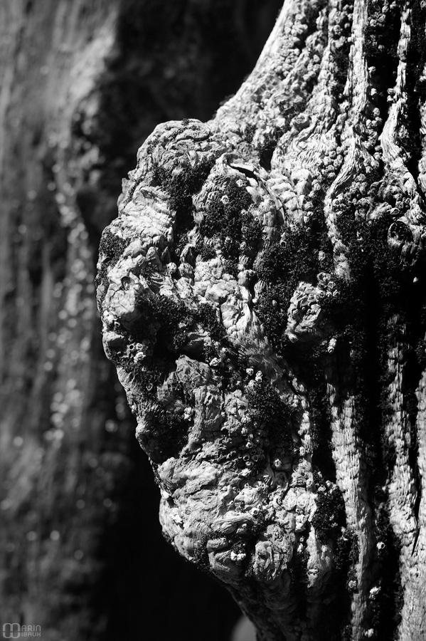Visage d'un brise lame de St-Malo