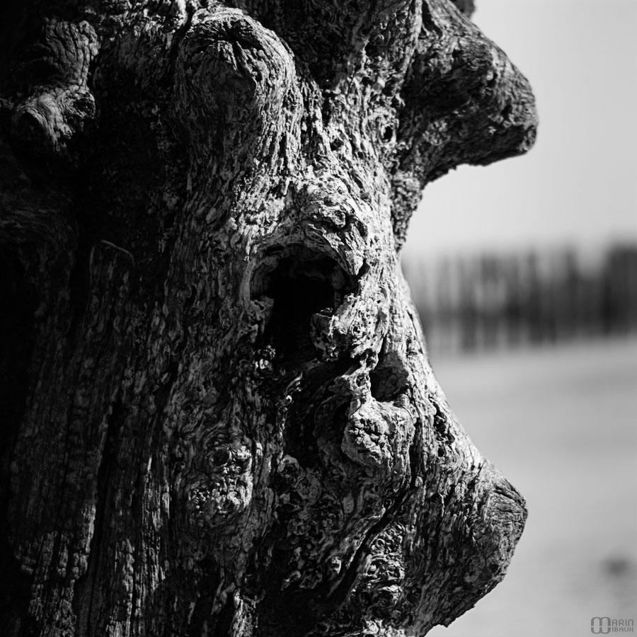 Gueule de bois dans un brise-lame de St-malo : le cochon