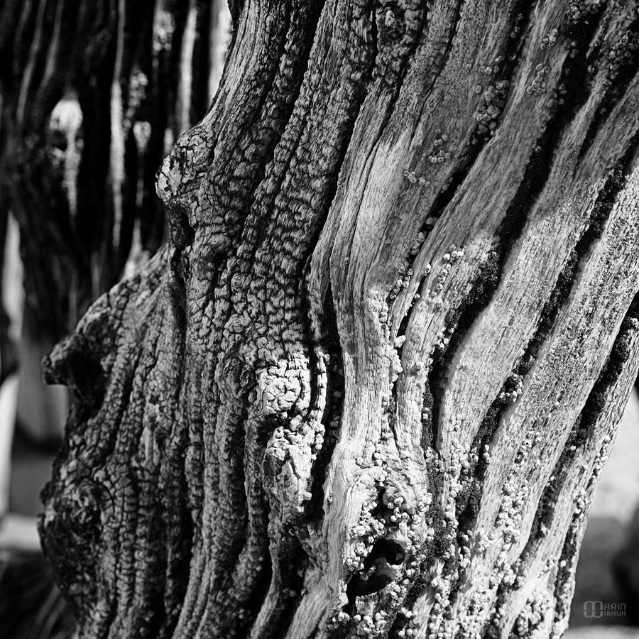 Gueule de bois : brise lame de St-Malo