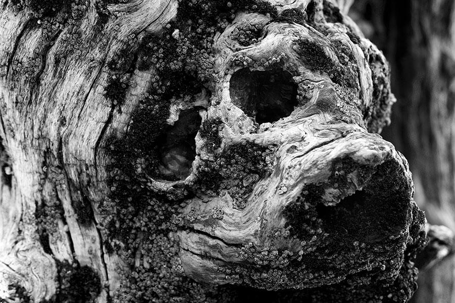Gueule de chien dans les brise-lames de St-Malo
