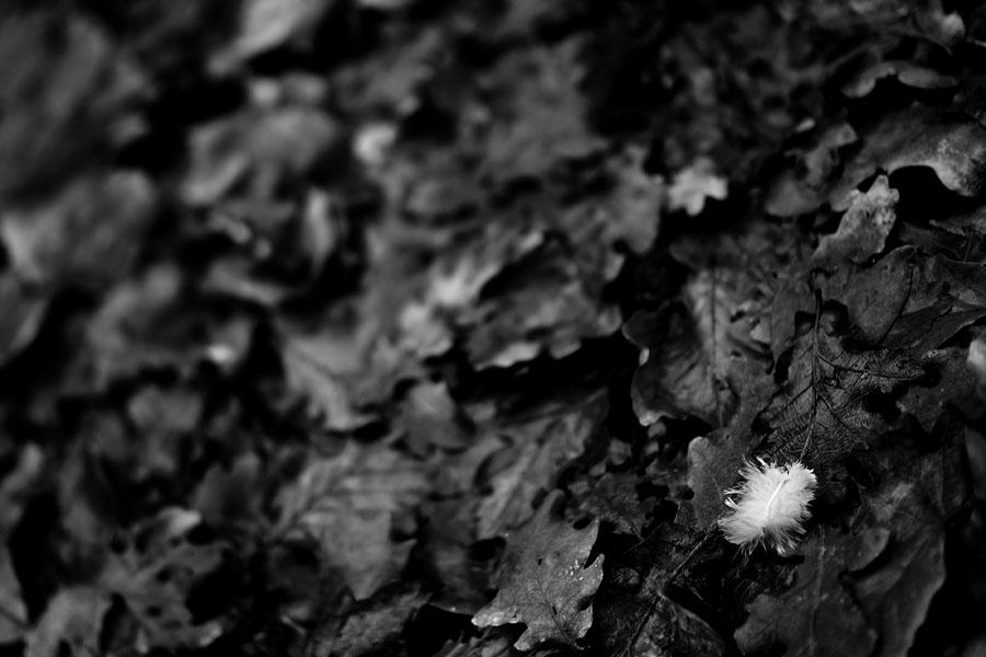 Plume sur feuilles de foret