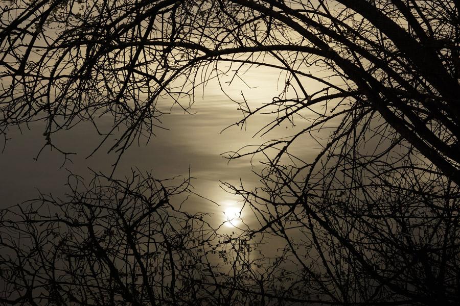 Soleil dans un nid de reflet sur un étang