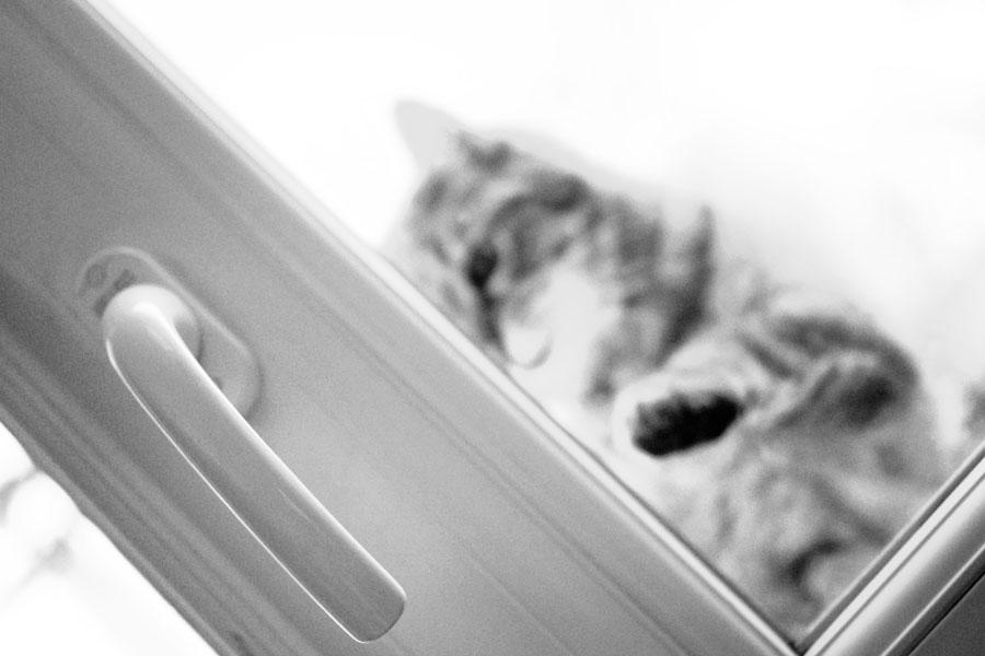 Chat derrière une fenêtre - photo noir et blanc