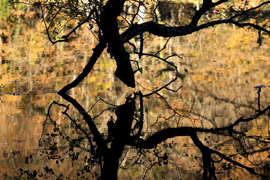 Reflet de l'arbre au sabot