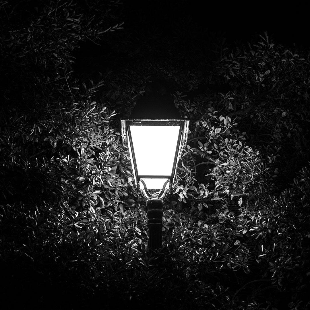 Réverbère de nuit sur fond d'arbustes en noir et blanc