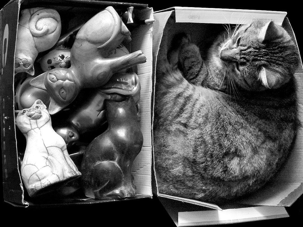 Chat veilleur de bibelots (de chat)