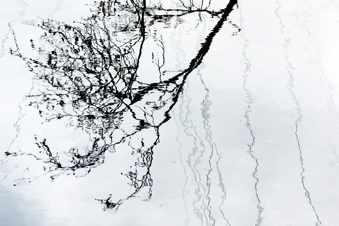 Reflets d'une branche et de fils électriques sur la surface d'un étang