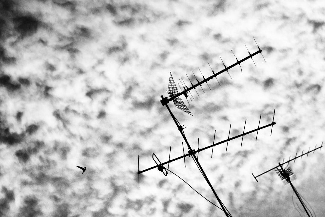 Vol d'un martinet entre les antennes sous un ciel de soirée à Lisbonne