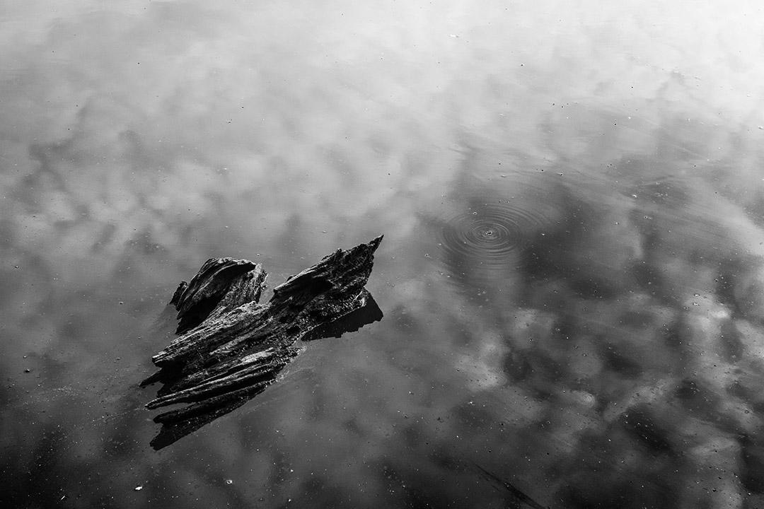 souche de bois sur l'eau stagnante d'un étang