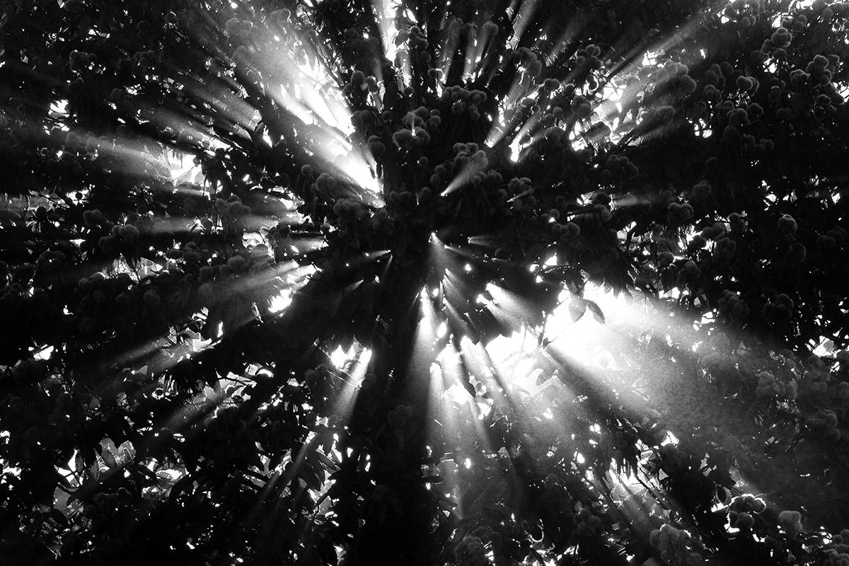 Rayon de soleil dans la brume déchiré par les branches et les feuilles d'un arbre
