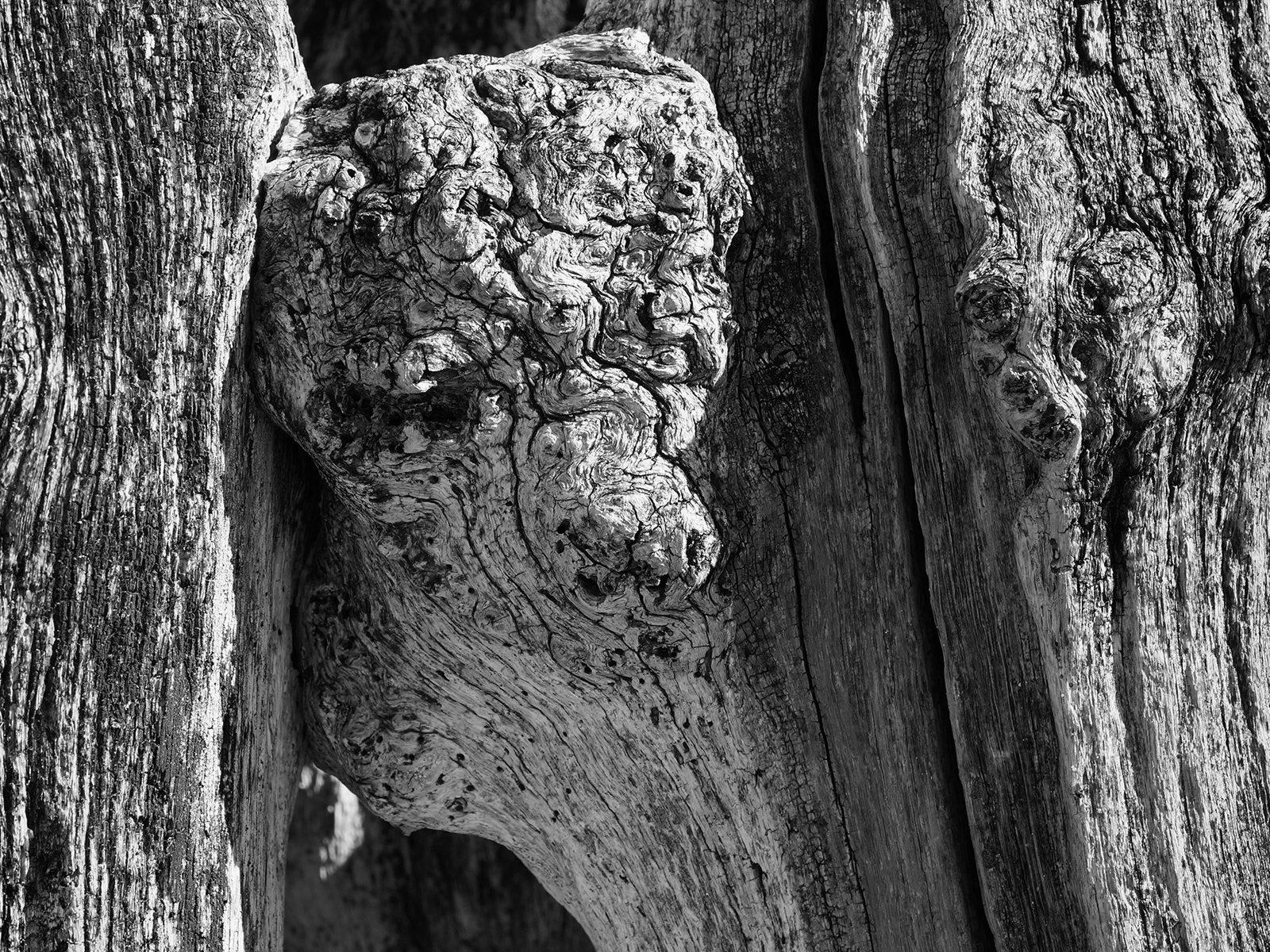 Brise-lames de Saint-Malo : portrait d'un agneau