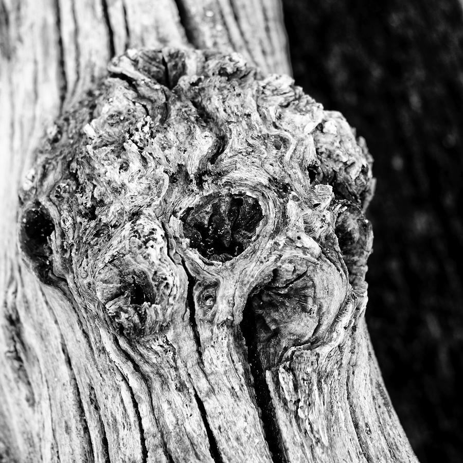 Brise-lames de Saint-Malo : un squelette en noir et blanc