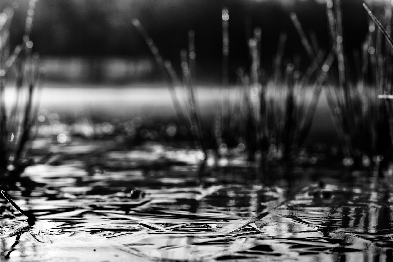 Eau gelée d'un étang