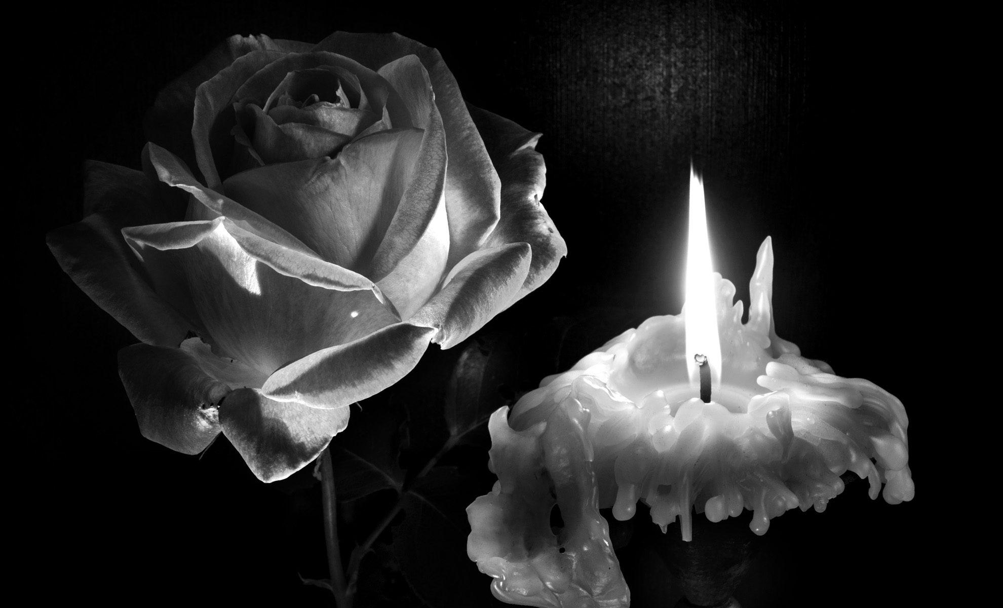 Noir et blanc : rose et bougie ; nature morte vivante