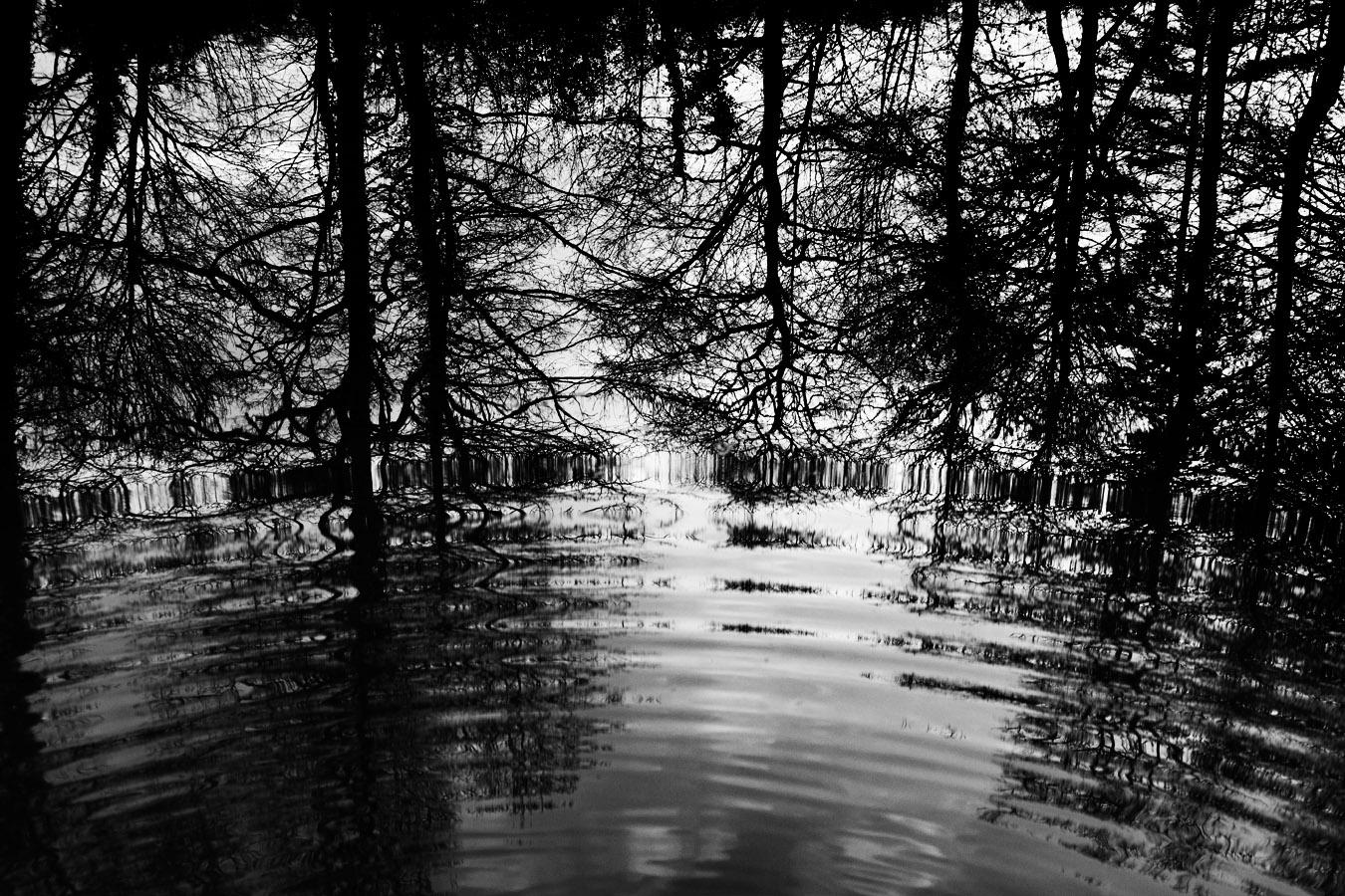 Reflets ondoyants de ramures d'arbre sur un étang : noir et blanc hivernal