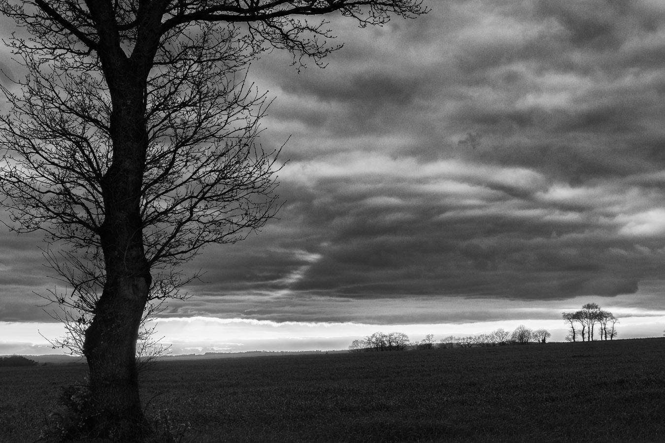 Coucher de soleil en campagne avec arbre en contrejour et jeu de contraste dans les nuages ; noir et blanc