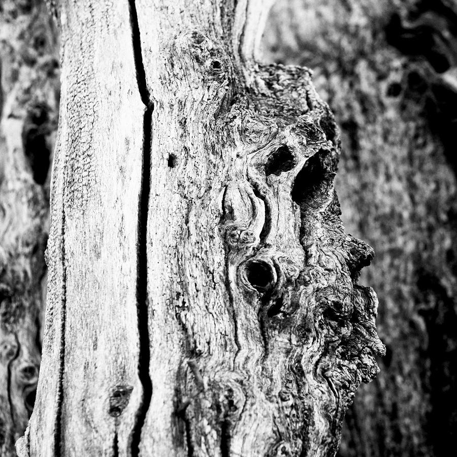 Brise-lames de Saint-Malo : profil de bois