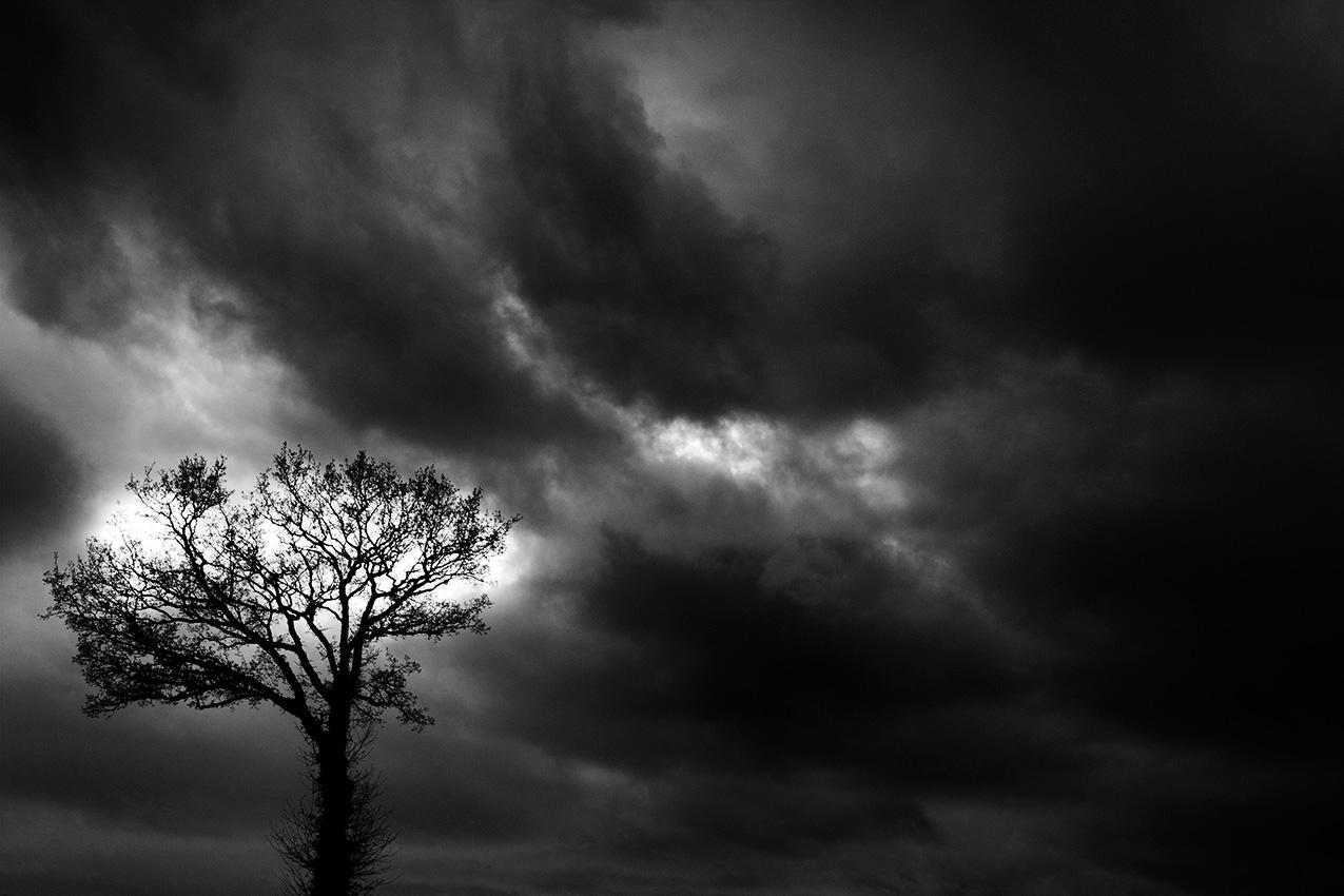 ciel nuageux et arbre de soleil