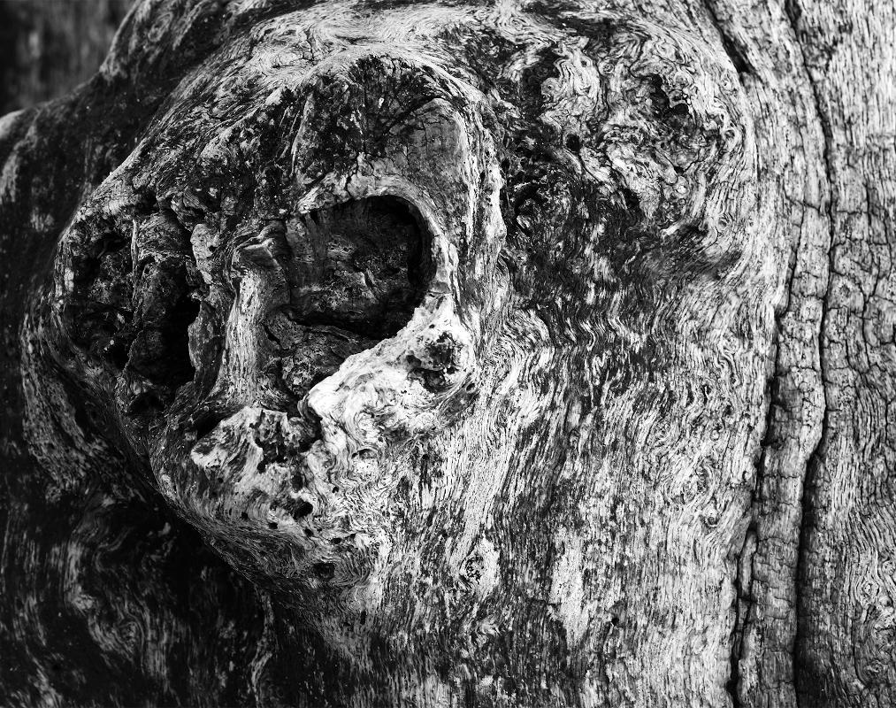 Tête d'une chouette dans le bois d'un brise-lames de St-Malo