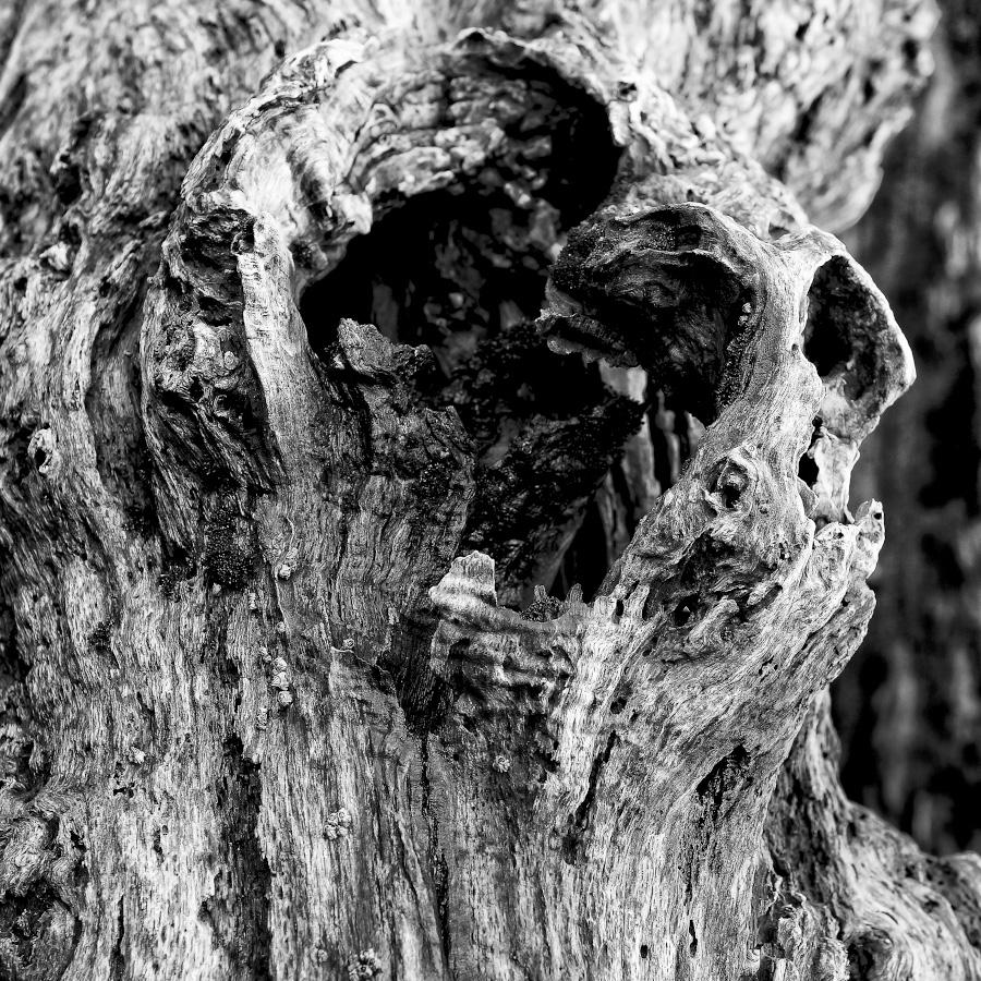 Détail d'un brise-lames de St-Malo : eclat de bois rongé par la pluie, la mer et le vent : photo noir et blanc