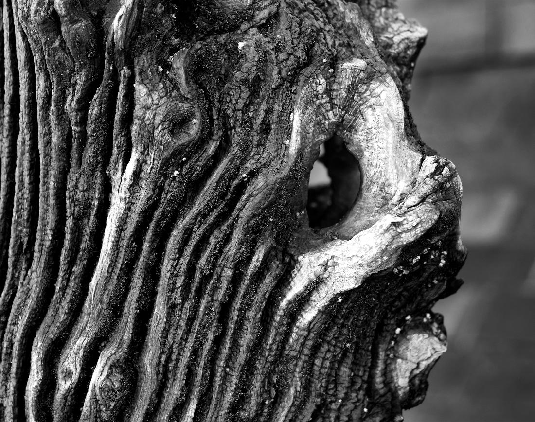 Visage de chat dans le bois d'un brise-lames à Saint-Malo : noir et blanc
