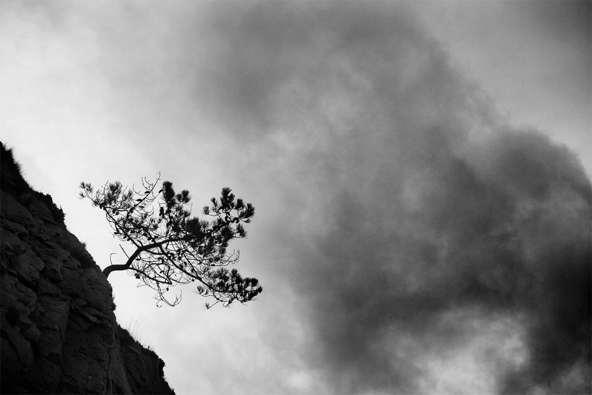 Pin qui pousse sur une paroi de rochers à la verticale : photo noir et blanc pinède et ciel