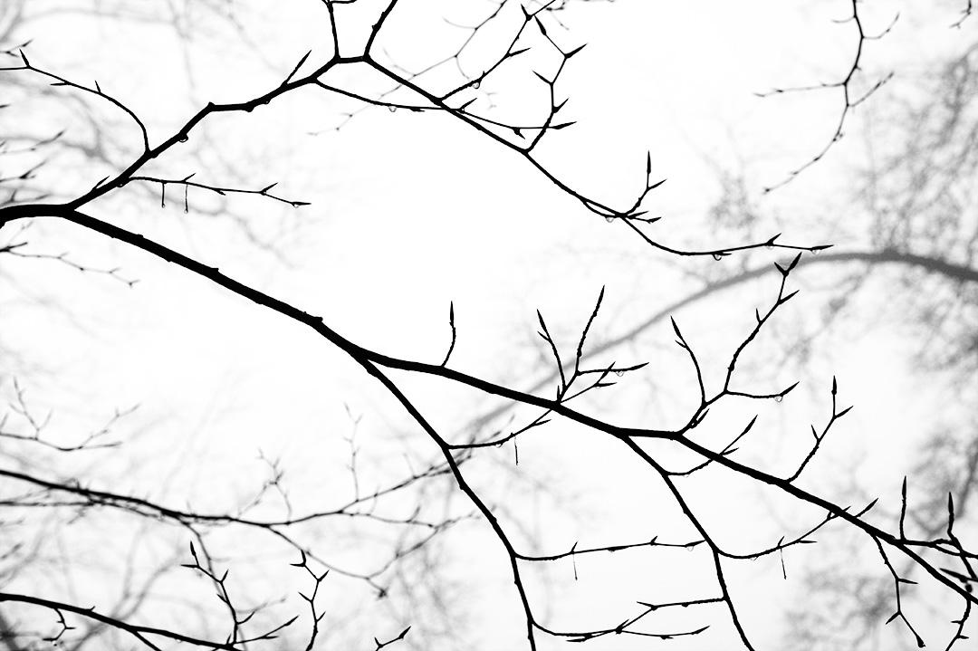 branches en contrejour sous brume d'hiver : gouttes d'eau et noir et blanc