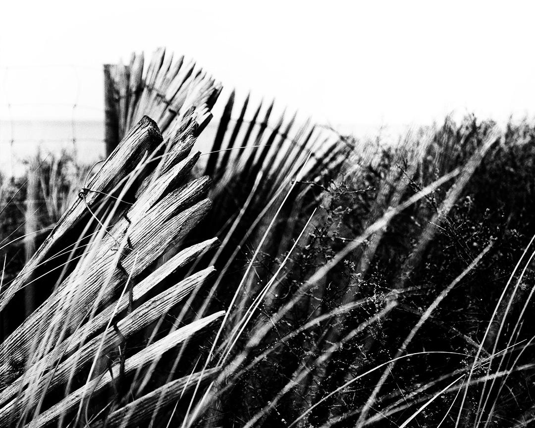 ganivelles en noir et blanc : des clôtures de plages et bords de mer